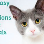 119+ Easy trivia questions about animals