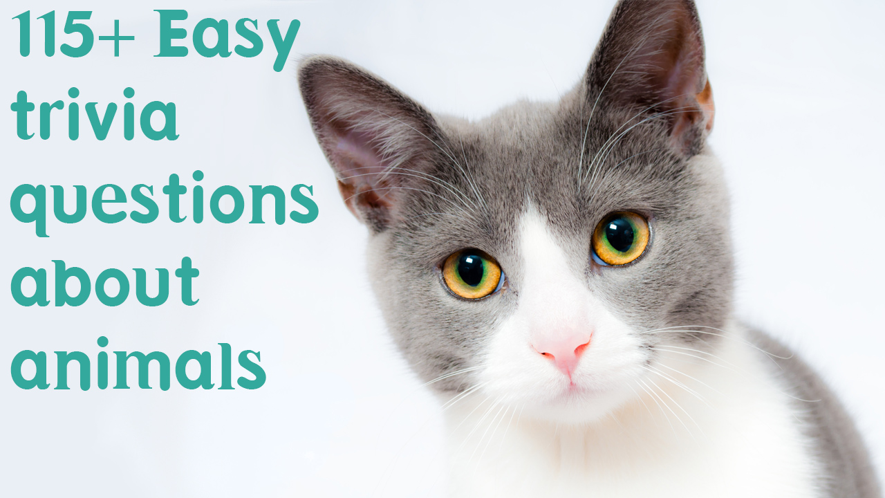 Easy trivia questions about animals