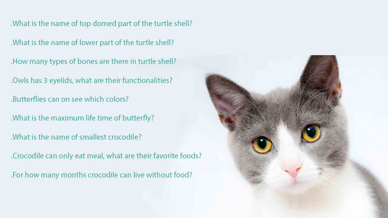 Fun-trivia-questions-about-animals