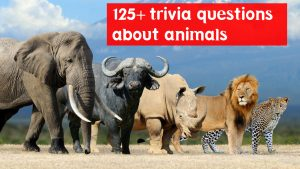 trivia questions about animals