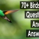 70+ birds trivia questions and answers