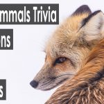 50+ mammals trivia questions and answers[All Types]
