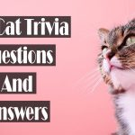 70+ cat trivia questions and answers[All Types]