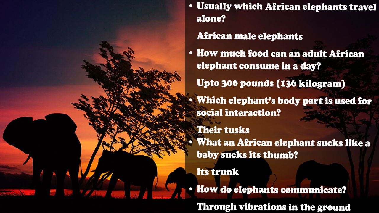 elephant trivia question