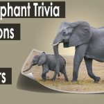 60+ elephant trivia questions and answers